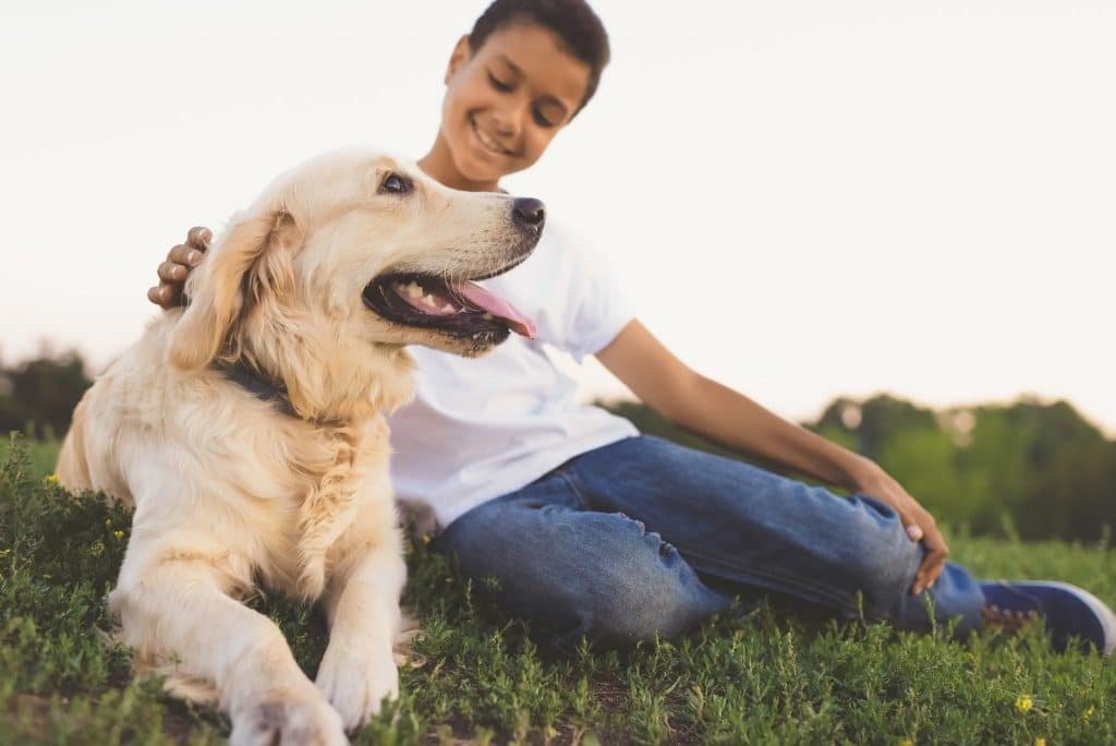 close-up view of cute golden retriever dog and happy african american teenage sitting on grass