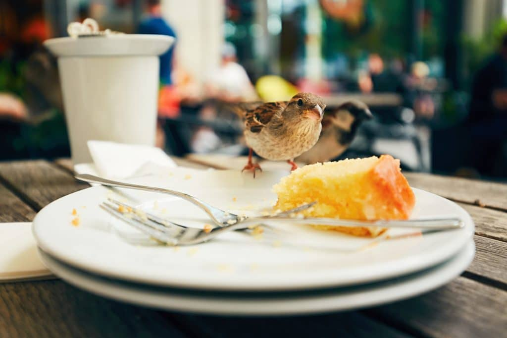 Food leftovers and hungry bird